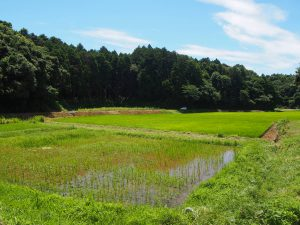 Organic Rice Paddy and Forest