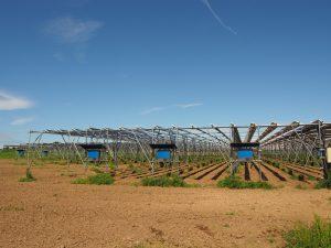 Sosa Mega Solar Sharing